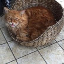 猫さんのベッド