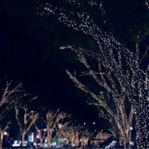 表参道のクリスマスが…