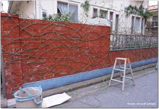 つるバラの誘引 壁面 庭仕事