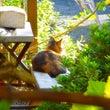 熊本県山鹿市 猫(縞…