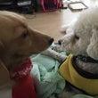 犬の行動学 犬は順位…