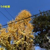 入谷南公園の紅葉