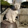 猫を探しています!!…