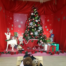 クリスマスの撮影スポ…