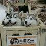 根古屋神社の大ケアキ…