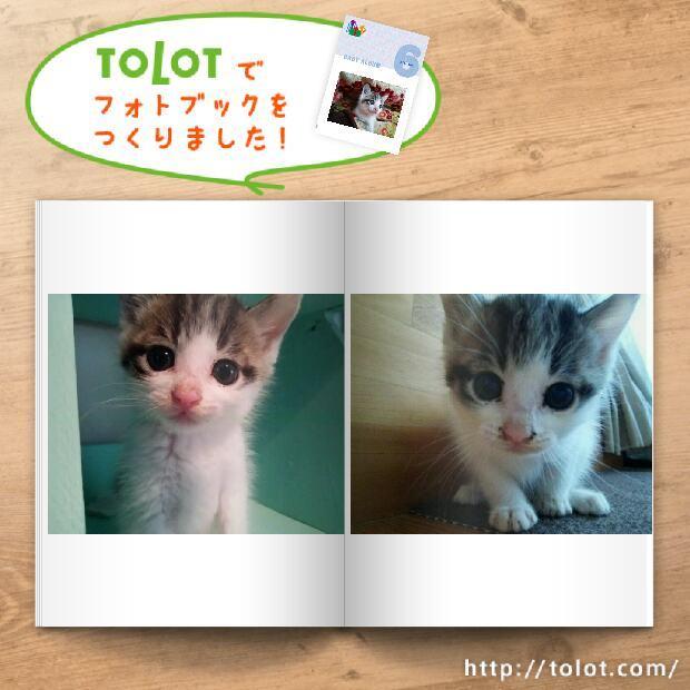 tolot_1480827891839.jpg