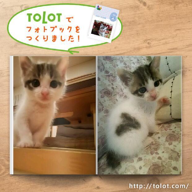tolot_1480828085947.jpg