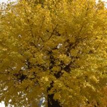 西町公園の紅葉