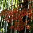 修善寺温泉の紅葉~1…
