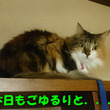猫に関する名言集 ―…