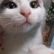Kノラ猫たち~トパー…