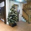 クリスマスツリーの設…
