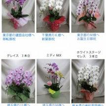 12/5 胡蝶蘭ご注…