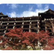 京都の紅葉に興奮して…