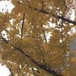 Autumn Lea…