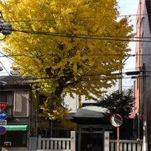 秋葉神社の紅葉