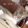 愛知、岐阜あたり 猫…
