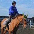 騎手生、障害飛越競技…