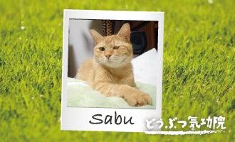 猫 ねこ にゃんこ 白血病 ウィルス 闘病記