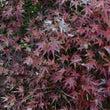 紅葉、黄葉、美しい色…