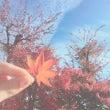 まだ秋がありました