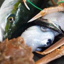 京丹後網野産天然魚「…