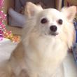 【更新】保護犬の預か…