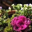 366の誕生日