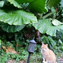 クワズイモと猫達と薪…