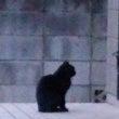 我が家に居つく黒猫