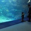 水族館を2往復
