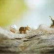 ボルネオ象への粉ミル…