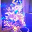 今日はクリスマスツリ…