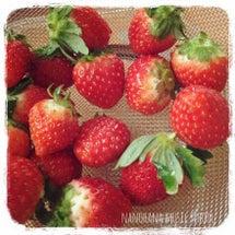 苺大好き!