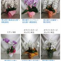 12/7 胡蝶蘭ご注…