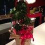 クリスマスツリーの日