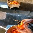 干し柿むき