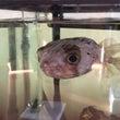 海水魚ANDワンコ1…