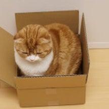 小さな箱の中身は