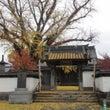 明行寺の大イチョウ …