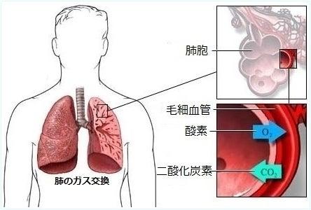 肺のガス交換機能
