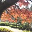 ネコちゃん、鎌倉へ行…