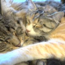 毎日べったりな猫たち