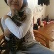 猫とハムスター達と