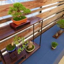 盆栽:秋の展示会、展…