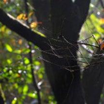 森をぬけると冬いちご