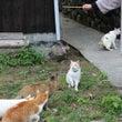 青島の猫は女性が大好…