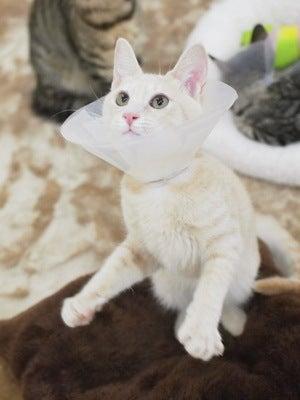 クリームの猫ちゃん