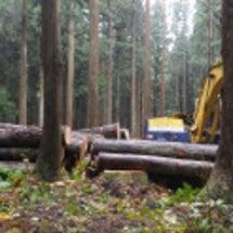 十日町の杉で家を造る…