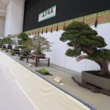 盆栽:五万石展へ